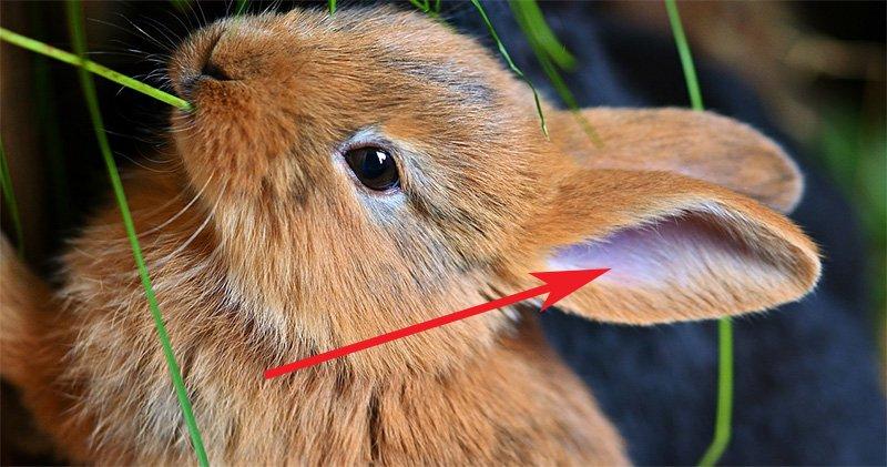 dirty in bunny ears
